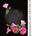 花朵 花 花卉 29279379