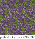 黑莓 花紋 圖樣 29282897