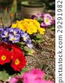ดอกไม้,เบ่งบาน,แปลงดอกไม้ 29291982