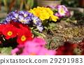 ดอกไม้,เบ่งบาน,แปลงดอกไม้ 29291983