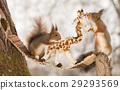 nature mammal stand 29293569
