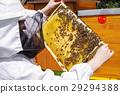 蜂窝 养蜂人 养蜂业 29294388