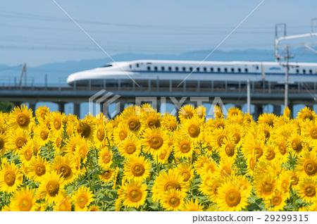向日葵領域和高速火車 29299315