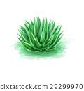 Green aloe 29299970