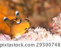 海参 水生的 水下 29300748