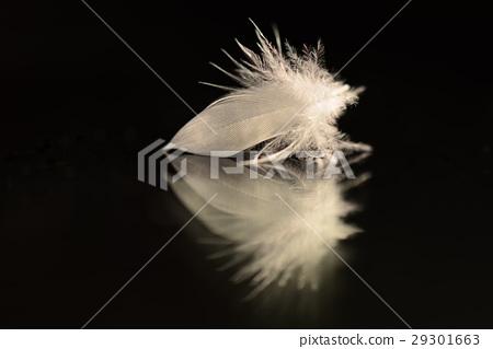 Feather white feather bird feather 29301663