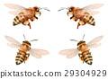 蜜蜂 蟲子 漏洞 29304929