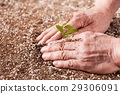 대지 수확 29306091