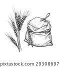 drawn flour wheat 29308697