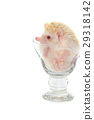 Hedgehog in the glass , African pygmy hedgehog 29318142