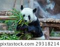 Panda 29318214