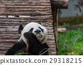 Panda 29318215