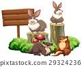 sign board rabbit 29324236