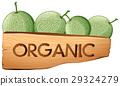 Cantaloupe fruits and organic sign 29324279
