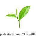 綠色 綠 茶 29325406