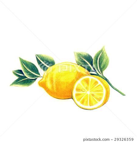 신선한! 레몬 29326359