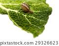 Snail 29326623
