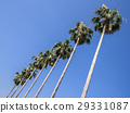 coconut palm, palm trees, palmtree 29331087