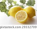 檸檬 水果 柑桔類 29332709