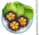 Fresh sea urchins and green vegetables on plate 29333527