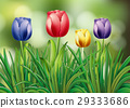 flower plant blossom 29333686