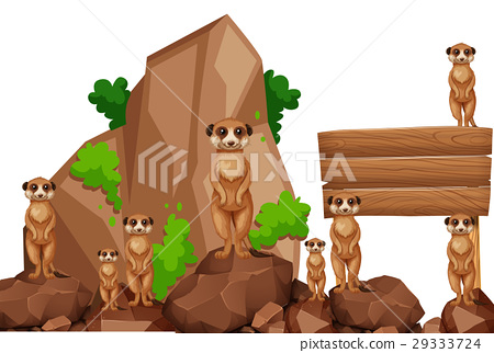 Wooden sign with meerkats on the rock 29333724