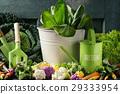 cabbage salad background 29333954