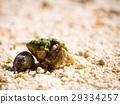 沙灘 海灘 寄居蟹 29334257