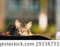 Small Gray Cat Kitten Resting On Old Roof At Sunny 29336733