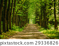Walkway Lane Path With Green Trees in Forest 29336826