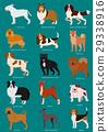 동물, 개, 강아지 29338916