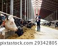 農場 奶牛 白板 29342805