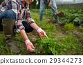 farm, gardening, couple 29344273