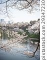 ดอกซากุระบาน,ซากุระบาน,ฤดูใบไม้ผลิ 29347230