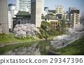 ดอกซากุระบาน,ซากุระบาน,ฤดูใบไม้ผลิ 29347396