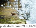 青蛙 水 生物 29351829