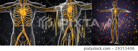 3d rendering medical of the human vascular system 29353406