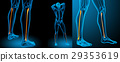 3d rendering medical illustration of the tibia 29353619