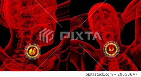 3d rendering medical illustration of thyroid gland 29353647