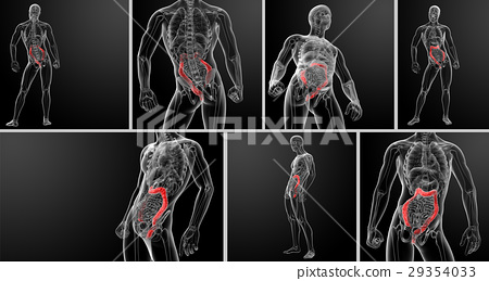 3d rendering illustration of the human 29354033