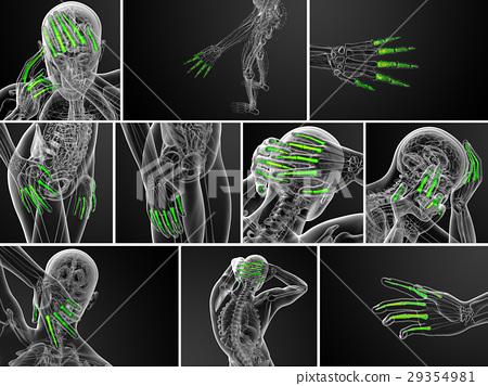 3d rendering illustration of human phalanges hand - Stock