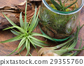 Interior green of Air plants and terrariums 29355760