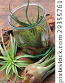 Interior green of Air plants and terrariums 29355761