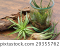 Interior green of Air plants and terrariums 29355762