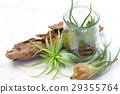 Interior green of Air plants and terrariums 29355764