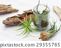 Interior green of Air plants and terrariums 29355765