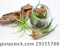 Interior green of Air plants and terrariums 29355766
