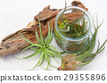 Interior green of Air plants and terrariums 29355896