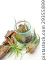 Interior green of Air plants and terrariums 29355899