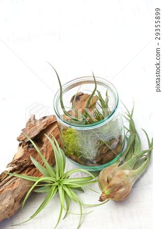 空中植物 室内盆栽 观叶植物 29355899